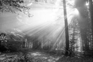 Trauerkarte-Sonnenstrahlen-im-Wald-0420