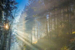 Trauerkarte Wald mit Licht